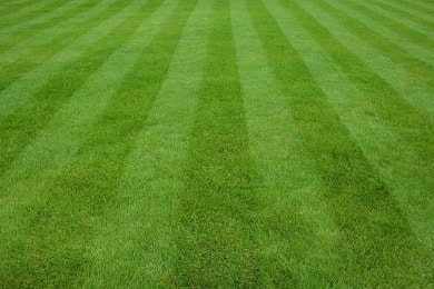 Lawn Care Services in Greeley, Colorado