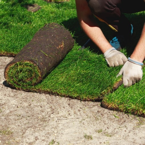 Sod Installation Services in Westminster, Colorado